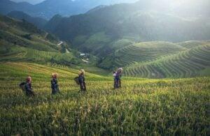 thailand green rice terrace mountain view