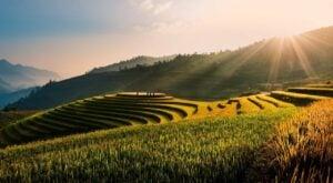 Tu Lu Terrace Rice Fields vietnam